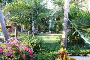 Saftiges grün auf Aruba