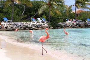 Flamingos direkt am Strand
