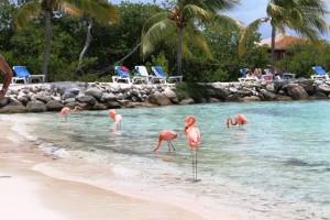Urlaub auf Aruba - Flamingos hautnah